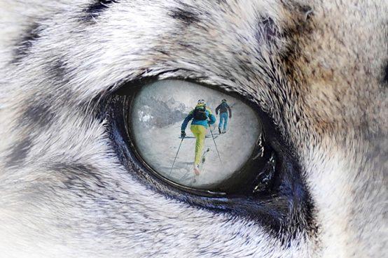 Snow Leopard Day 2020 Dynafit